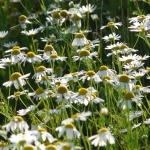 17 דרכים טבעיות לטפל במתח וחרדה באופן טבעי
