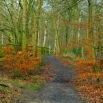 שבילי היער כשבילי האמונות וההרגלים שלך