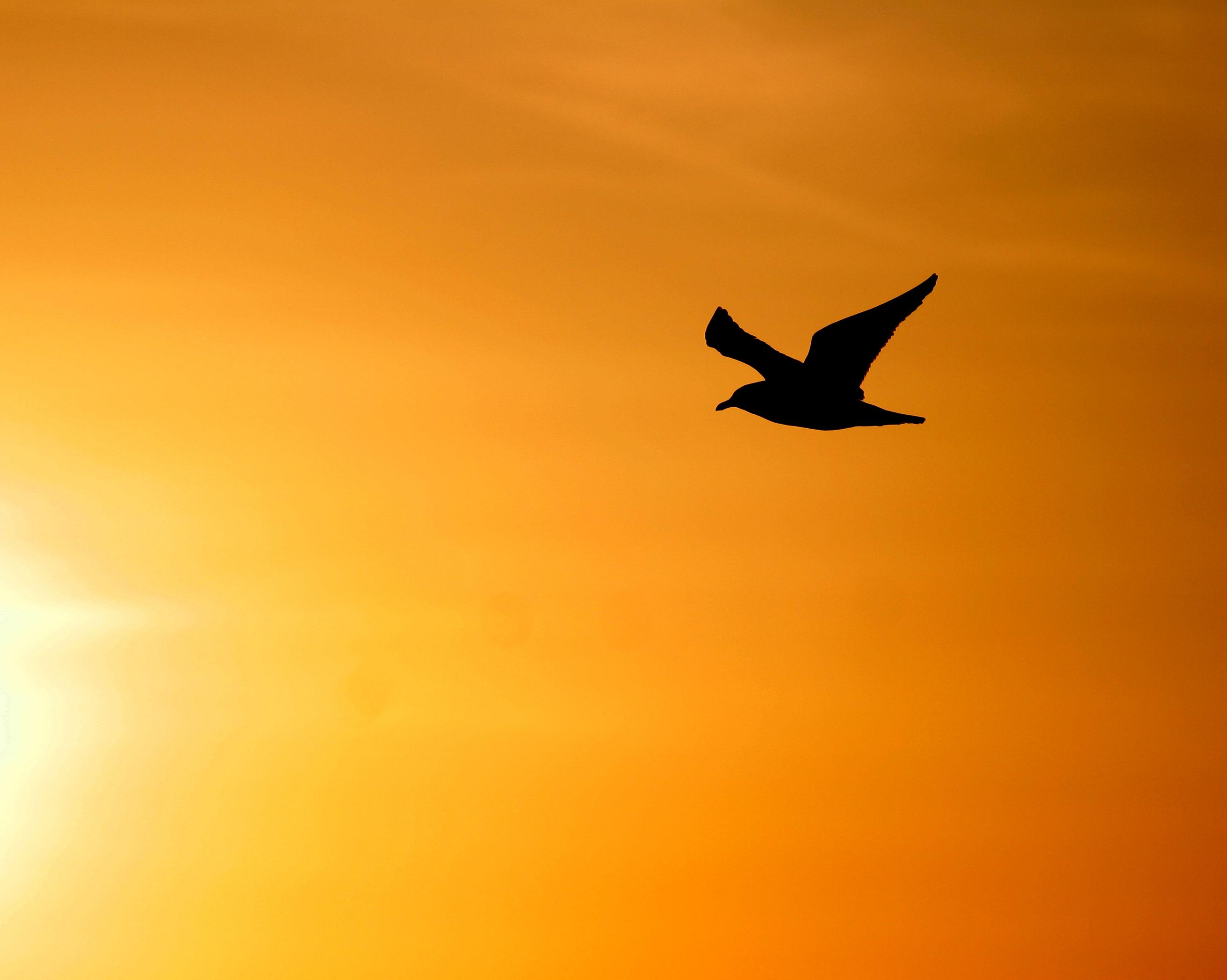 איך יוצאים לחופשי בחיים ומהו חופש אמיתי